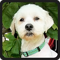 Adopt A Pet :: Ricky - San Diego, CA