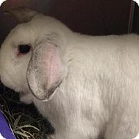 Adopt A Pet :: CASTIEL - Boston, MA