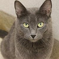 Adopt A Pet :: Gilda Radner - Naperville, IL