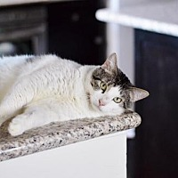 Adopt A Pet :: Adele - Santa Monica, CA