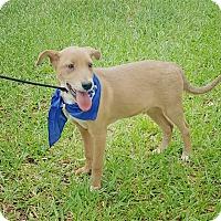 Adopt A Pet :: Jax - Houston, TX