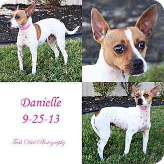 Feist/Terrier (Unknown Type, Small) Mix Dog for adoption in Union City, Tennessee - Danielle
