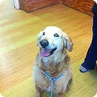 Adopt A Pet :: Jasper - New Canaan, CT