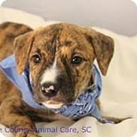 Adopt A Pet :: Reba - South Jersey, NJ