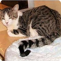 Adopt A Pet :: Bucky - Colmar, PA