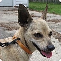 Adopt A Pet :: Wally - Thomasville, NC