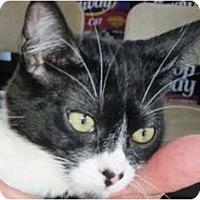 Adopt A Pet :: Dominika - Pasadena, CA