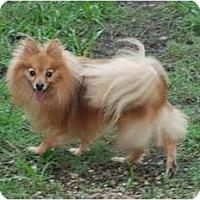 Adopt A Pet :: Taylor - Virginia Beach, VA