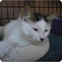 Adopt A Pet :: Frizzle - lake elsinore, CA