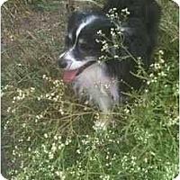Adopt A Pet :: Coty - Mesquite, TX