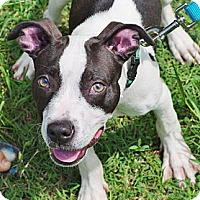 Adopt A Pet :: Electron - Reisterstown, MD