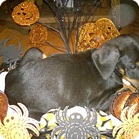 Adopt A Pet :: Igor - Allegan, MI