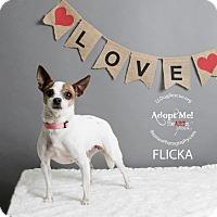 Adopt A Pet :: Flicka - Shawnee Mission, KS