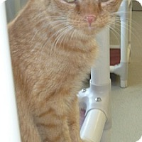 Adopt A Pet :: Veronica Ann - Hamburg, NY