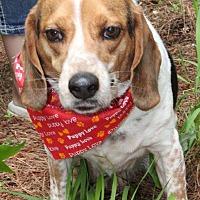 Adopt A Pet :: Buddy - Cameron, NC