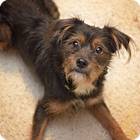 Adopt A Pet :: Trixie - Millersville, MD