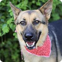 Adopt A Pet :: Lina - Lakeland, FL