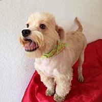 Adopt A Pet :: Bruno - BONITA, CA