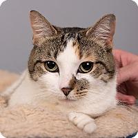 Adopt A Pet :: Bethany - Wilmington, DE