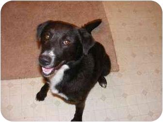 Border Collie Mix Dog for adoption in Hendersonville, Tennessee - Jasmine