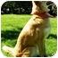 Photo 2 - Border Collie Dog for adoption in Bellevue, Nebraska - Seamus