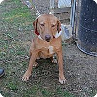 Adopt A Pet :: Sleepy - Albemarle, NC