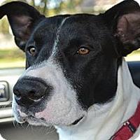 Adopt A Pet :: Dory - Cherry Hill, NJ
