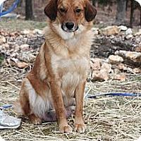 Adopt A Pet :: Daisy Jane - St Louis, MO
