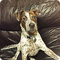 Adopt A Pet :: Pollock - Hagerstown, MD