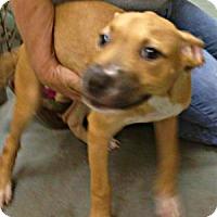 Adopt A Pet :: Charity - Silsbee, TX