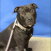 Adopt A Pet :: Huck - Brookhaven, NY