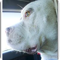 Adopt A Pet :: Benjamine snuggler - Sacramento, CA