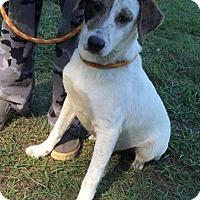 Adopt A Pet :: Patches - Ocala, FL