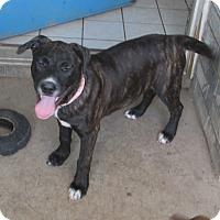 Adopt A Pet :: Peanut - Copperas Cove, TX