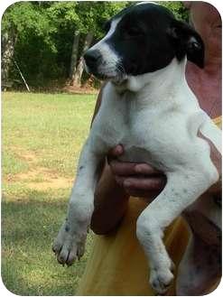 Labrador Retriever Mix Puppy for adoption in Thomaston, Georgia - Wanda