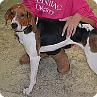 Adopt A Pet :: Stasha- in CT - West Hartford, CT