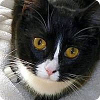 Adopt A Pet :: Little Girl - Denton, TX
