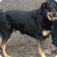 Adopt A Pet :: Crosby - Surrey, BC