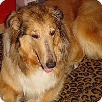 Adopt A Pet :: Tobi - Minneapolis, MN
