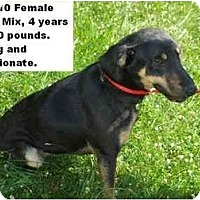 Adopt A Pet :: # 341-10 - ADOPTED! - Zanesville, OH