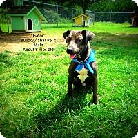 Adopt A Pet :: Gator - Gadsden, AL