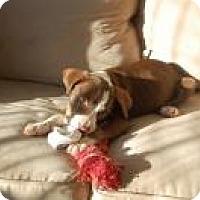 Adopt A Pet :: Princess - Marlton, NJ