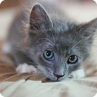 Adopt A Pet :: Elton - Canoga Park, CA