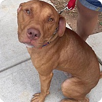 Adopt A Pet :: Bubba Gump - Atlanta, GA