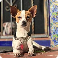 Adopt A Pet :: June - Miami, FL