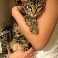 Adopt A Pet :: Meek - La puente, CA