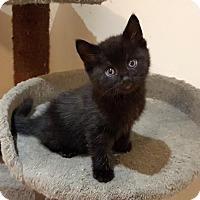 Adopt A Pet :: Skipper - Richmond Hill, ON