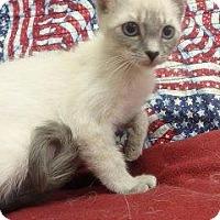Adopt A Pet :: Sasha #167106 - Apple Valley, CA