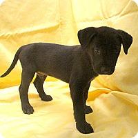 Adopt A Pet :: 17-d06-031 Binnion - Fayetteville, TN