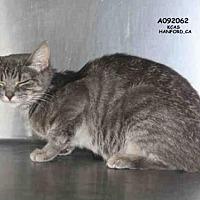 Adopt A Pet :: *SPARROW - Hanford, CA